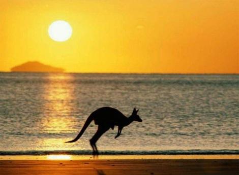 En Australia hay 3 veces más canguros que personas