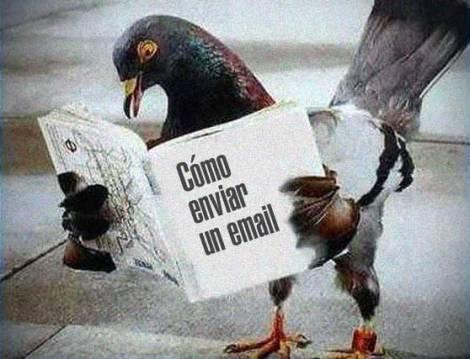 paloma-mensajera